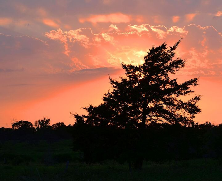 Wheelock Cedar Tree Sunset